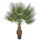 5 foot Artificial Washintonia Palm with Natural Trunk: Potted Silk Plants, Cactus Plants, Artificial Plants And Trees, Pirates Cove, Silk Tree, Under Stairs, Luau Party, Tropical Paradise, Topiary