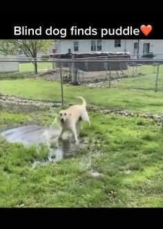 Funny Animal Jokes, Cute Funny Animals, Funny Dogs, Cute Animal Videos, Cute Animal Pictures, Cute Puppies, Cute Dogs, Gato Gif, Cute Little Animals