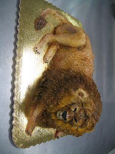 Lion Cake  Flickr Photo Sharing cakepins.com