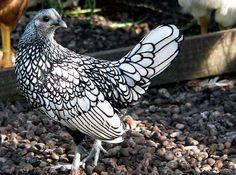 amazing black and white bird - ain't nature grand?