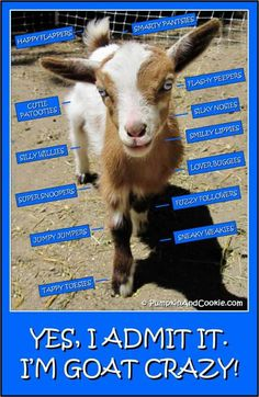 I love my goats. if i could potty train my goats i would so have at least one house goat.