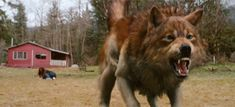 vampires and werewolves from twilight - Google Search