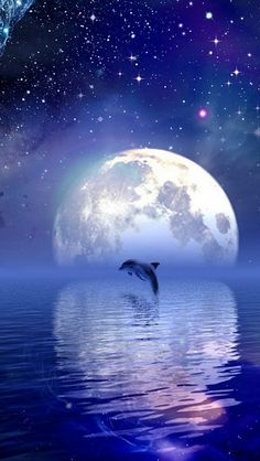 Stop the Dolphin Slaughter - these beautiful creatures need to be kept safe from the disgraceful human behaviour shown most recently by Japanese fishermen. Stars Night, Stars And Moon, Beautiful Creatures, Animals Beautiful, Full Moon In Pisces, Scorpio Moon, Dolphin Art, Shoot The Moon, Wale