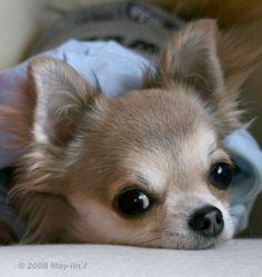 ¡Qué pereza dan los lunes! #perros #dogs #mascotas