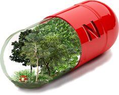 La `Vitamina N´ es el efecto positivo de la naturaleza en nuestro organismo traduciendose en salud y calidad de vida Shinrin-Yoku (Baños de Bosque) es la mejor y garantizada actividad desde un análisis riesgo-beneficio para personas en muy mal estado físico, psiquico o de edad avanzada.