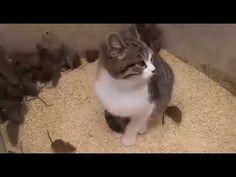 Kucing Lucu - Kucing dan Tikus | Kucing vs Tikus