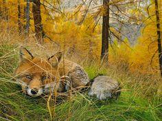 National Geographic publicó su colección de Photo of the Day de 2015. Las fotografías fueron seleccionadas entre las que presentó cada día la organización durante el año.