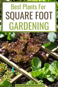 If you're new to square foot gardening, you'll love this collection of vegetables, fruits and herbs you can use in your small backyard garden. Backyard Vegetable Gardens, Small Backyard Gardens, Backyard Landscaping, Fall Vegetables, Organic Vegetables, Veggies, Gardening For Beginners, Gardening Tips, Everbearing Strawberries