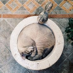 cat sleeping in a bowl Crazy Cat Lady, Crazy Cats, I Love Cats, Cute Cats, Baby Animals, Cute Animals, Cat Sleeping, All About Cats, Fauna