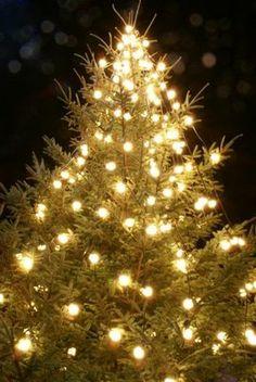 299 best Beautiful Christmas Lights images on Pinterest | Christmas ...