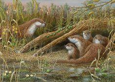 Mark Chester. Riverside Retreat – Otter Family