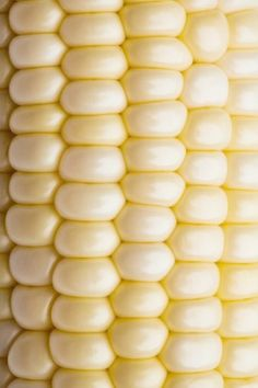 Close up of corn on the cob image for purchase on GettyImages bfghjklbvcdtyj, I like the soft buttery yellow color. Close up of corn on the cob image for purchase on GettyImages bfghjklbvcdtyj, I like the soft buttery yellow color. Yellow Photography, Fruit Photography, Pattern Photography, Texture Photography, Close Up Photography, Abstract Photography, Photography Portraits, Photography Ideas, Macro Nature Photography