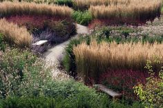 tall wheat grass along a property border with purple in front... Dan Pearson - Broughton Hall