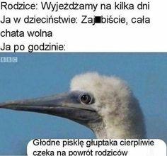Funny Picture Quotes, Funny Pictures, Funny Quotes, Very Funny Memes, Wtf Funny, Polish Memes, Dark Sense Of Humor, Komodo Dragon, Everything And Nothing