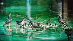 Urban, Bird, Nature, Animals, Animales, Animaux, Naturaleza, Animais, Birds