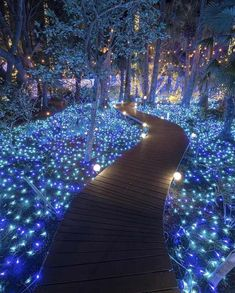 The shining path ~ Kanagawa, Japan Photo: Congrats! 😍 ➡Founders: ⬅ Tag your favourite person!