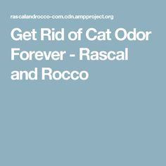 Get Rid of Cat Odor Forever - Rascal and Rocco Odor Eliminator, Cats, Gatos, Deodorant, Cat, Kitty, Kitty Cats