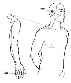 Small Intestine #acupressure #reflexology meridian •