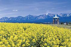 富良野 Flower Land觀光農場