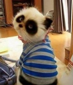 Panda cat. I just laughed a lot.