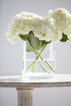 White Hydrangea arrangement in clear base Elegant Flowers, Simple Flowers, Beautiful Flowers, Exotic Flowers, White Flower Arrangements, Floral Centerpieces, Wedding Centerpieces, Hortensia Hydrangea, Hydrangea Macrophylla
