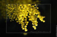 Купить СОЛНЕЧНАЯ ... ( авторская фотокартина для интерьера) - весна, фотограф, художественная фотография, авторская фотография