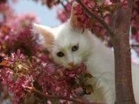 'Van Kedileri Görenleri Kendisine Hayran Bırakıyor!'
