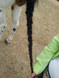 A way to braid horses tail! Absolutely gorgeous(:   First. Detangle with some show sheen or other spray.  Second.Braid hair into 3 parts.  Third. Braid them together. Last. Spray with some shine spray.