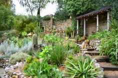 Will Giles' Exotic Garden : A fantasy landscape in Norfolk - guaranteed to lift your spirits in the autumn