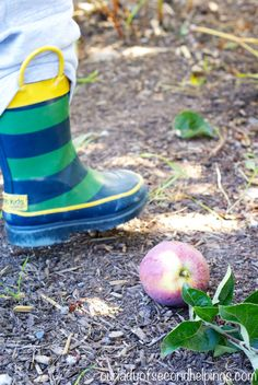 When in Washington – Pick Apples! | Our Lady of Second Helpings