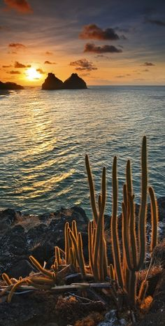 Fernando de Noronha - Brazil.  At 1BB we love Brazil!  Stay with our hosts www.1bb.com