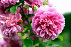 The 10 Most Fragrant Flowers to Plant in Your Garden — Martha Stewart Living - Flower Garden İdeas İn Front Of House Purple Flowers, White Flowers, Exotic Flowers, Beautiful Flowers, Best Smelling Flowers, Growing Peonies, Fall Plants, Garden Plants, Flowering Shrubs