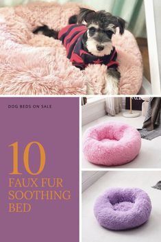 Get the best deal for Cushion Faux Fur Dog Beds from the largest online selection at DogMega. Unique Dog Breeds, Small Dog Breeds, Funny Dogs, Cute Dogs, Miniature Dog Breeds, Therapy Dog Training, Dog Breeds List, Loyal Dogs, Dog Wallpaper