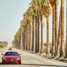Even the Palm Trees that line the road stand up straight and give their full attention to the all-new Mercedes-AMG GT S as it passes by.  #Mercedes #Benz #AMGGT #AMG #PalmSprings #California #ThermalClub #instacar #carsofinstagram #germancars #luxury @TheThermalClub #AMGPrivateLounge #drivingperformance