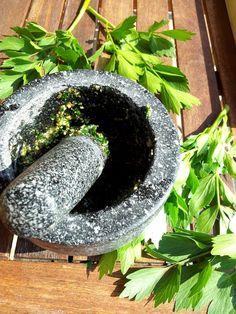 Libeček lékařský je stejně jako koriandr bylinka, kterou jedni k smrti nenávidí… Korn, Mortar And Pestle, Pesto