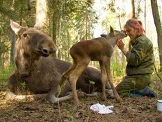 USSR's Conquest of Nature leads to domestication of many moose - no squirrel