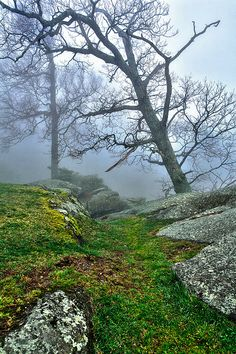 Hiking in the fog - Blue Ridge Parkway. http://picturenorthcarolina.com/north_carolina_pictures/sunrise-blue-ridge-pictures/ Main website: http://www.picturenorthcarolina.com Fine art gallery (buy prints): http://www.dan-carmichael.artistwebsites.com/index.html Blog: http://www.picturenorthcarolina.com/north_carolina_pictures/ Twitter: https://www.twitter.com/FineArtPic Google Plus: https://plus.google.com/108220676338347644845/ #artforsale #landscape #photograph #blueridge #blueridgeparkway