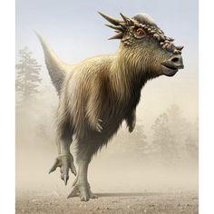 Stygimoloch a genus of pachycephalosaurid from the Cretaceous period Canvas Art - Mohamad HaghaniStocktrek Images x Dinosaur Art, Dinosaur Fossils, Animal Fur, Animal Heads, Jurassic Park World, Extinct Animals, Prehistoric Creatures, Zoology, Canvas Prints