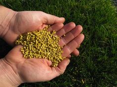 corn-gluten-meal as a natural lawn fertilizer that retards the growth if weeds