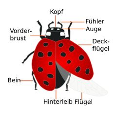 Beetle Science Investigations for Kids