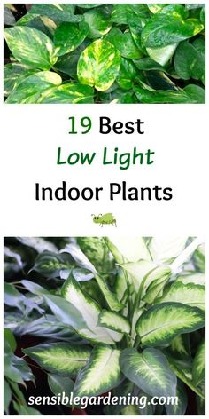 19 Best Low Light Indoor Plants with Sensible Gardening. Liven up those dark corners with easy care plants.