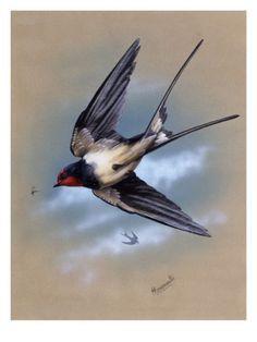 swallow book - Hledat Googlem