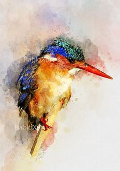 Watercolor Paintings and Prints by PabloXart on Etsy Art Watercolor, Watercolor Animals, Watercolor Illustration, Wildlife Art, Bird Prints, Animal Paintings, Bird Art, Oeuvre D'art, Painting Techniques