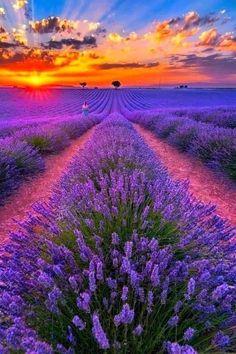 Beautiful Sunset, Beautiful Places, Beautiful Pictures, Wonderful Places, Landscape Photography Tips, Nature Photography, Photography Books, Photography Flowers, Lavender Fields France
