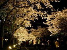 夜の森桜祭り