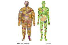 Natürliche und schnelle Fettverbrenner