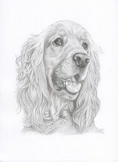 cocker spaniel drawing - Google Search