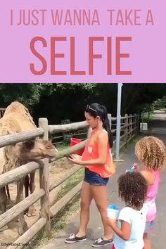 Just wanna take a selfie - Funny Troll & Memes 2019 Funny Animal Memes, Funny Animal Videos, Funny Animals, Funny Video Memes, Videos Funny, Wtf Funny, Funny Jokes, Funny Troll, Epic Fail Pictures