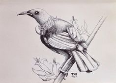 Tui - New Zealand inspired Pen drawing by amandahookdesign.com