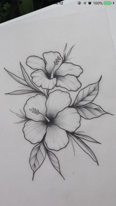Hibiscus flower _ / / _ Illustration _ Drawing _ Flower print _ Wall decoration… – Flower Tattoo Designs Flower Tattoo Designs – flower tattoos – flower tattoos – Tattoo World Easy Flower Drawings, Pencil Drawings Of Flowers, Flower Sketches, Cool Art Drawings, Pencil Art Drawings, Art Drawings Sketches, Drawing Ideas, Drawing Flowers